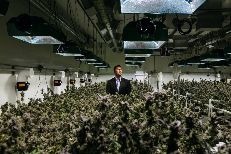 Terra Tech: Pioneering Urban Farming and Medical Cannabis