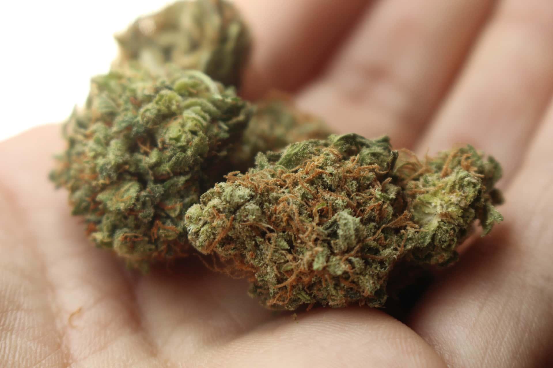 Legal Cannabis Sales Forecast to Grow 21% Per Year Through 2024