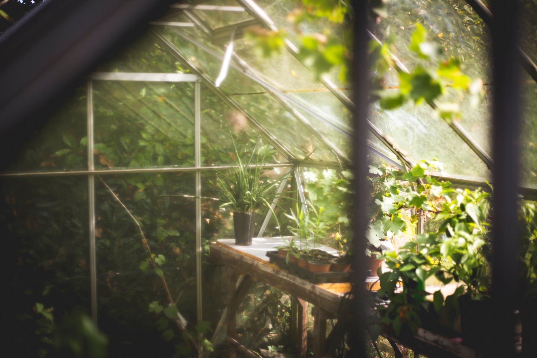 Future Farm buys 10-acre greenhouse in Florida generating $2.8 million in revenue