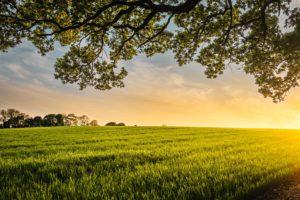 Evolving Cannabis Cultivation Smart Farming Technology Producing Better Strains