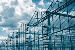 Green Organic Dutchman secures 75-acre property in Quebec