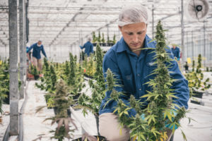 Operator of world's largest grow facility expanding to over one million square feet