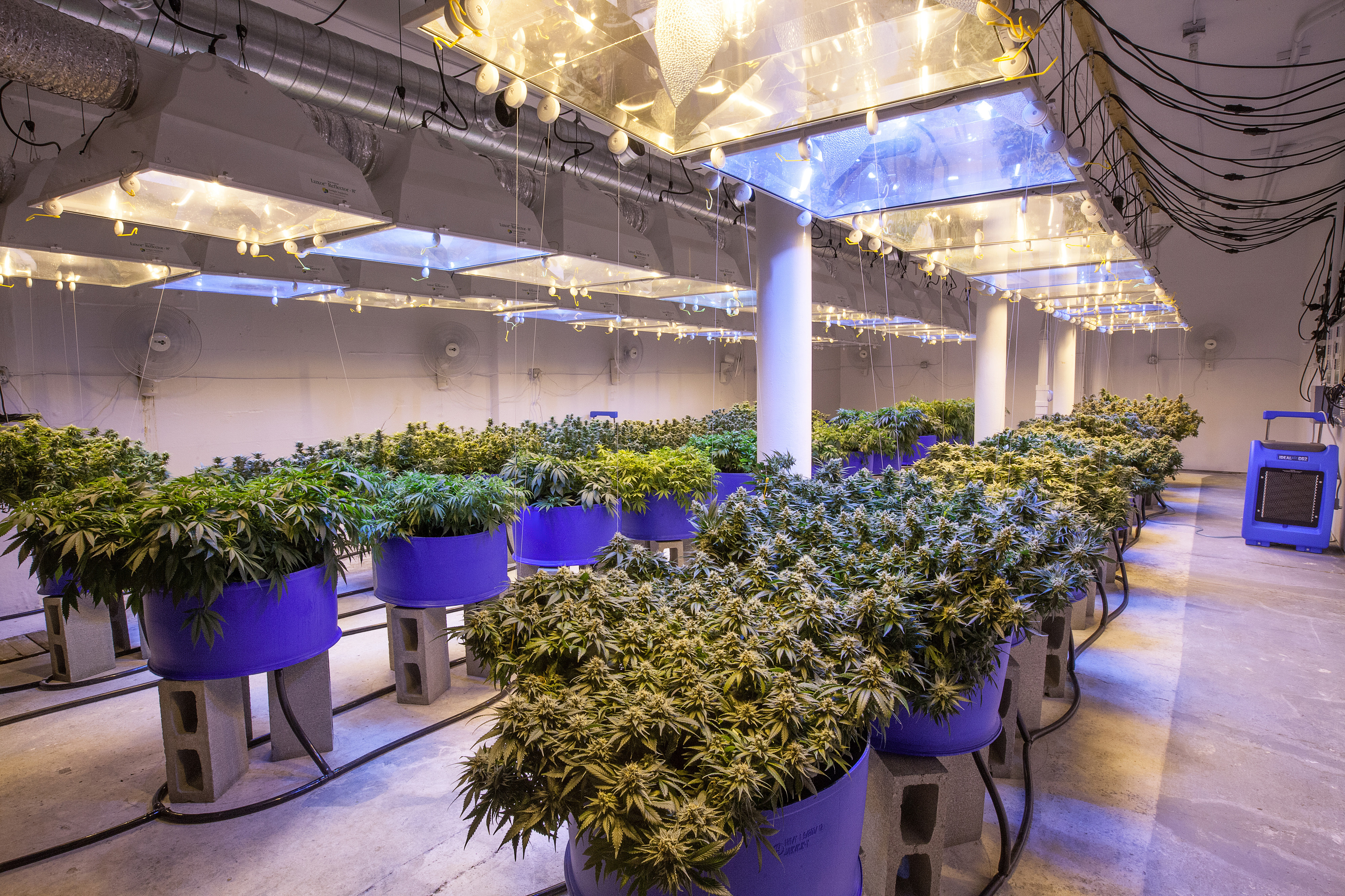 Aurora Cannabis Buys Urban Cultivator and BC Northern Lights