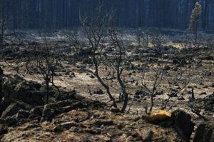 California fires devastate cannabis harvest