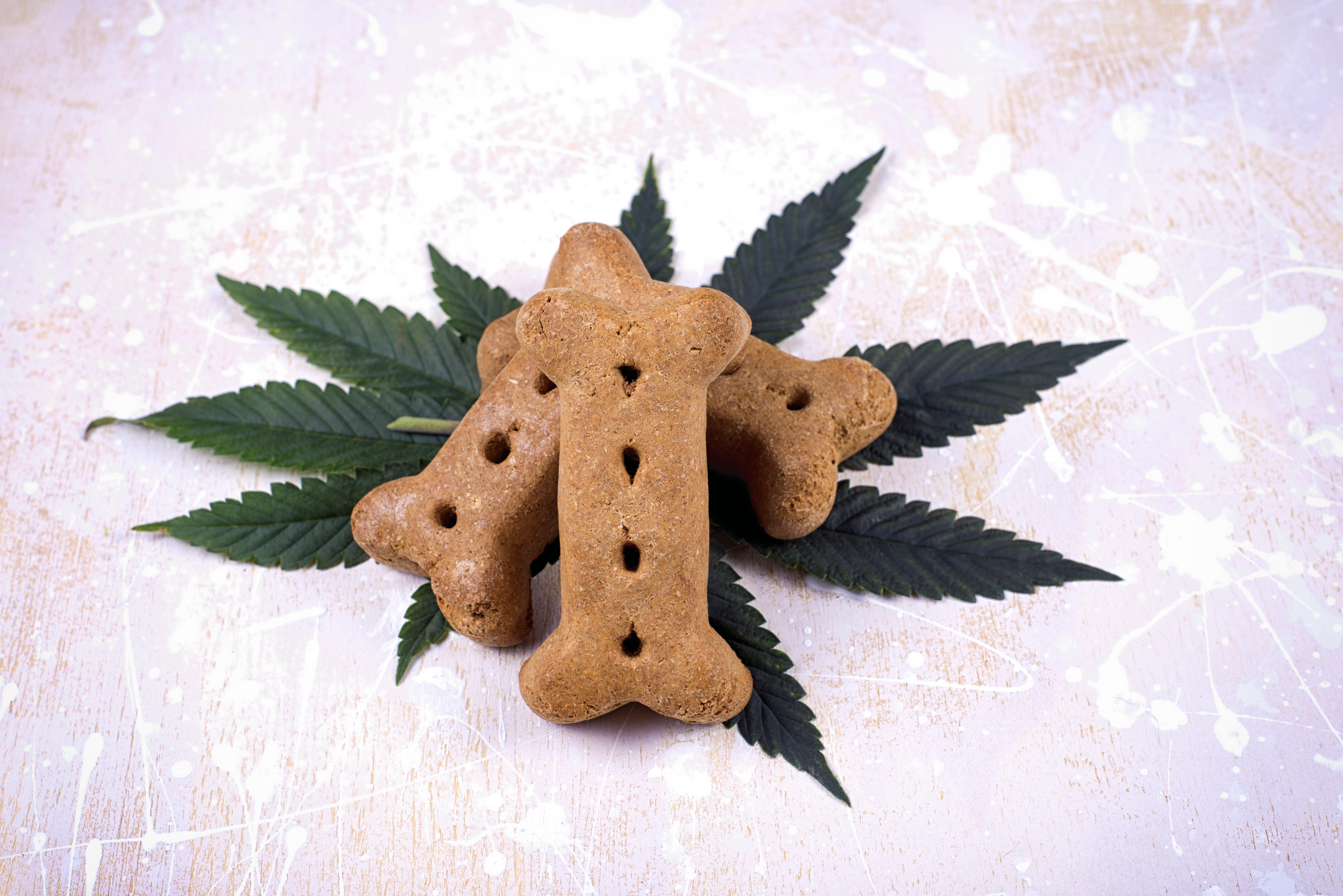 Friday Night Inc. begins marketing cannabis pet products