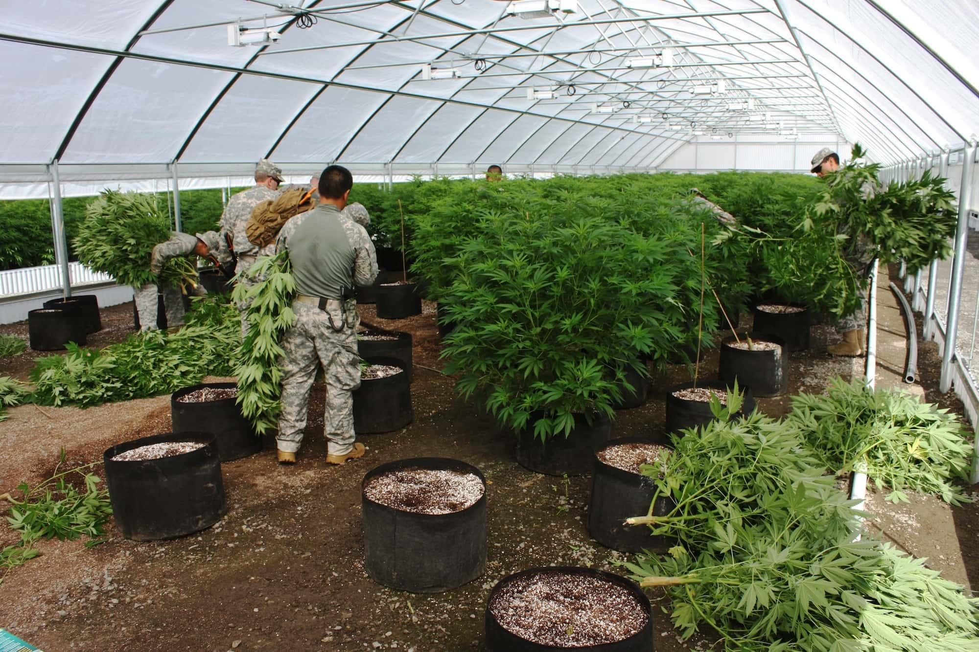 DEA Report Shows a Dramatic Drop in Cannabis Seizures in 2017