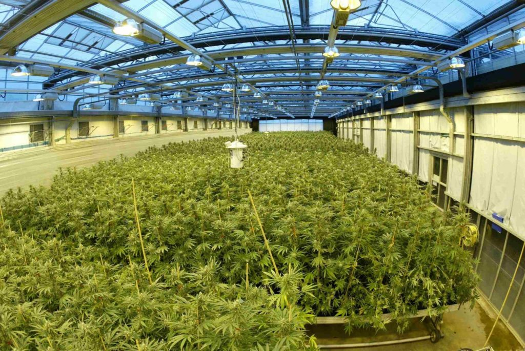 GW Pharmaceuticals: High Expectations for this Hemp Stock