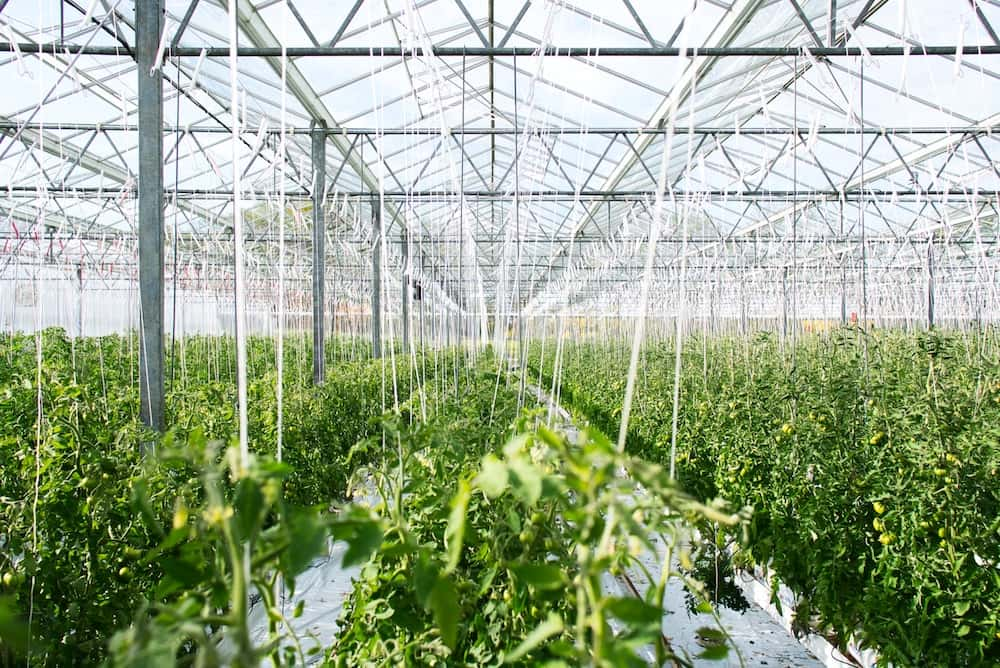 MedReleaf to Purchase 164 Acres with 23-Acre Greenhouse