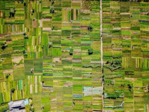 Final Draft Advancement of Senate Farm Bill to Fully Legalize Hemp