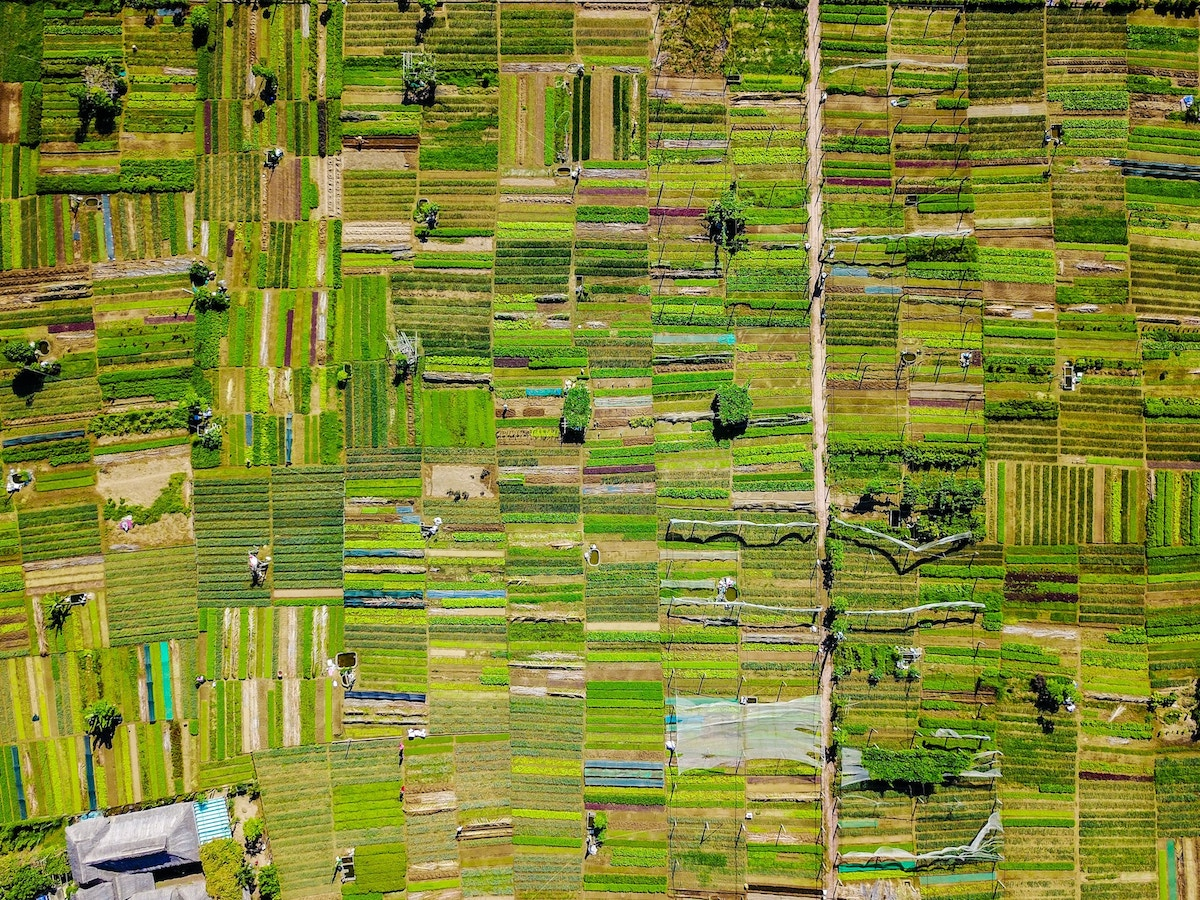 Arial view of farmland