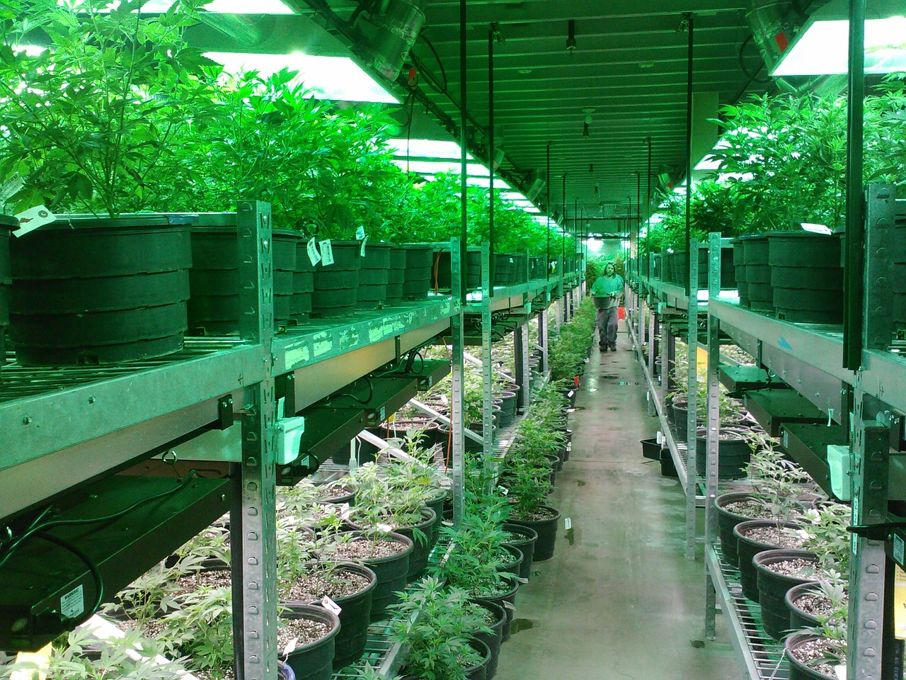Khiron Life Sciences to Secure First Medical THC and CBD Cultivation Licenses in Uruguay