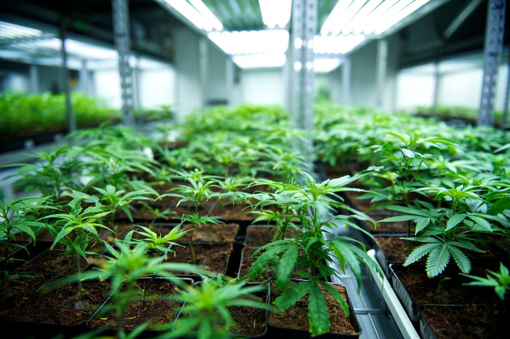 Tilray: Will This Marijuana Stock Gain Momentum in 2020?