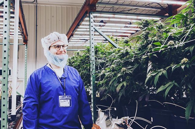 The Green Organic Dutchman Stocks See an Increase with News of Cannabis Oil Sales License