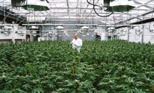 "Aurora Cannabis Firmly States it is ""leagues ahead"" with Scale, Production, Revenues, & Innovations in the U.S."