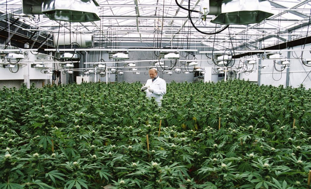 """Aurora Cannabis Firmly States it is """"leagues ahead"""" with Scale, Production, Revenues, & Innovations in the U.S."""