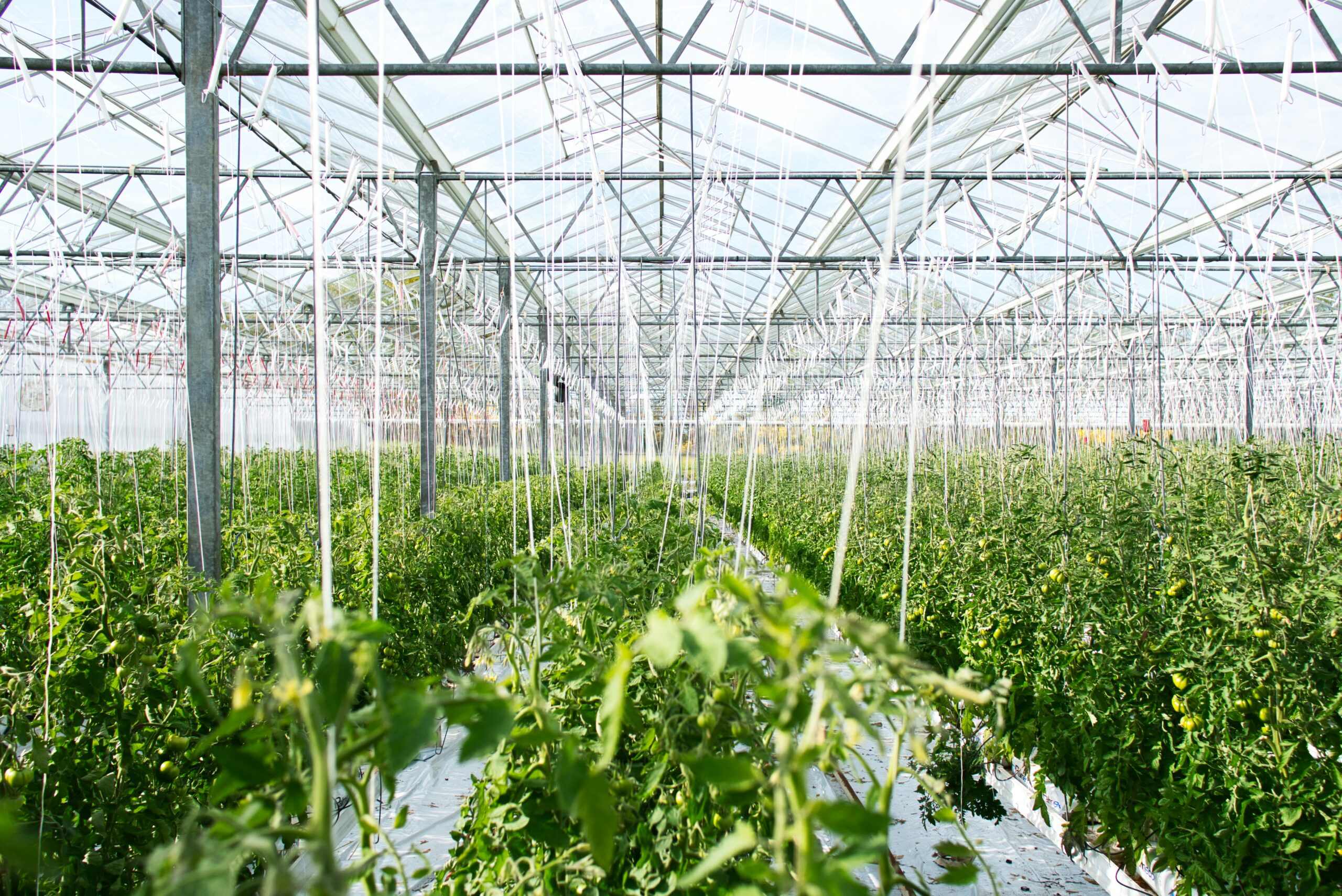 The Green Organic Dutchman Provides Update on Credit Financing
