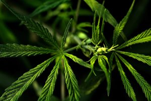 The United Kingdom Announces Plans for the Legalization of Medical Cannabis
