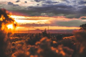 New Mexico Begins Issuing Non-Resident Medical Cannabis Cards