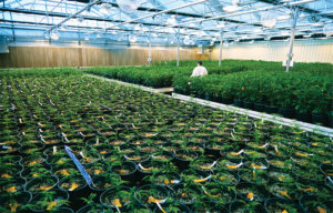 Cannabis Stock Green Thumb Industries Reports Strong Q1 Financials