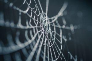 Charlotte's Web Hemp Stock Hemp News