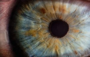 Hemp Inc. Eyes Expansion