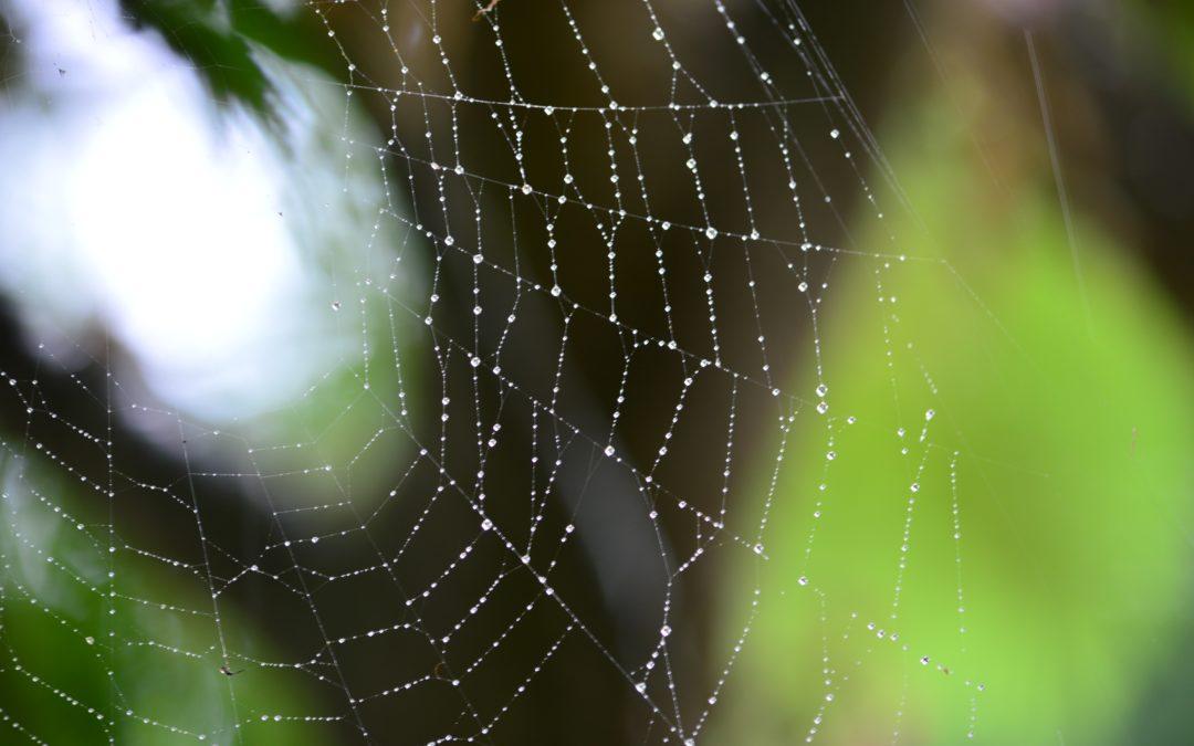 Hemp Stocks: Is Charlotte's Web still a Buy?
