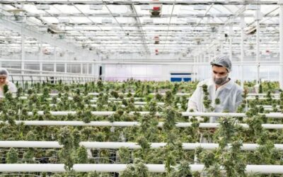 Is Aphria Stock a Buy Right Now?