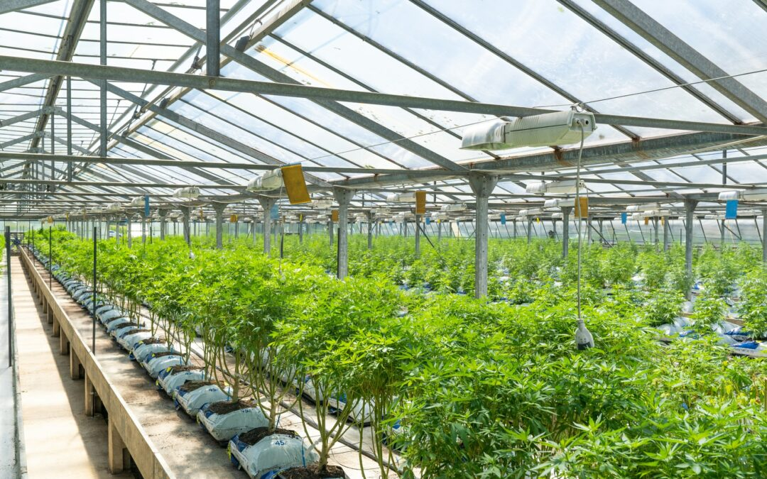 IIPR: Top Cannabis Stock for 2021?