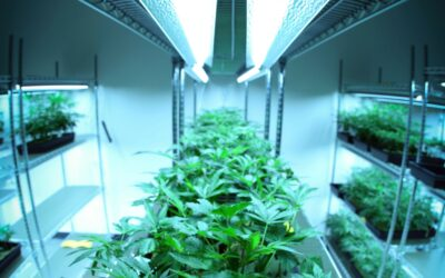 Best Cannabis Stock for 2021: GrowGeneration