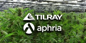 Is Tilray Stock a Good Buy After its 44% Fall?