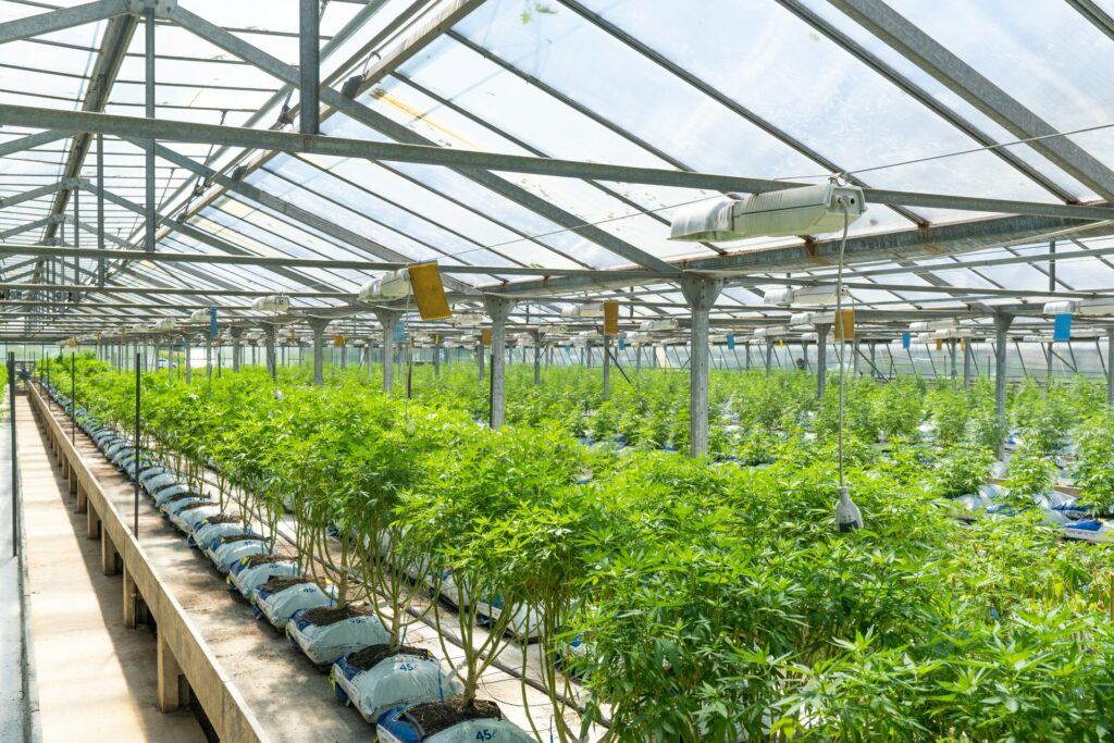 Why is Village Farms a Top Marijuana Stock for 2021?