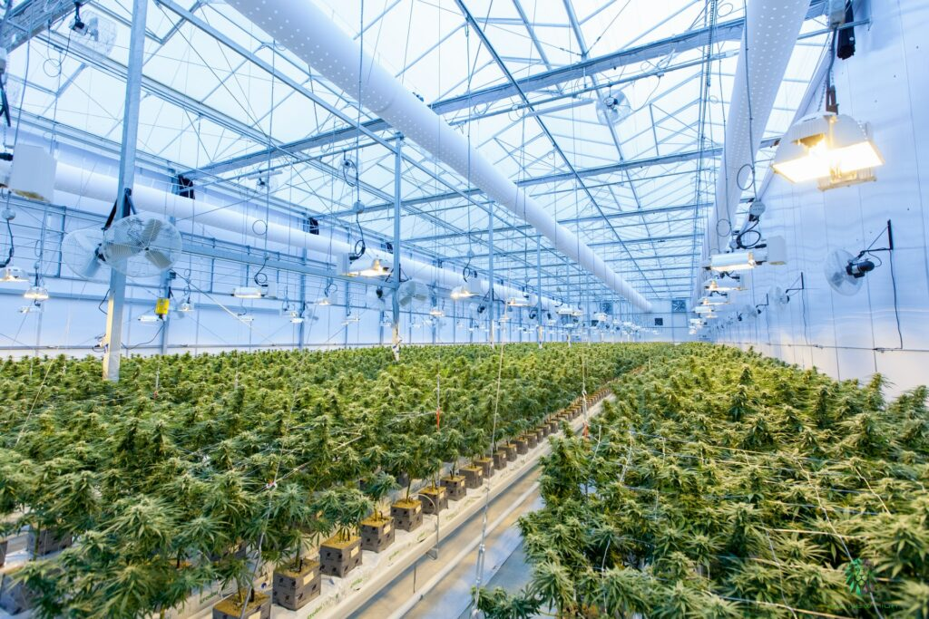 Cannabis Extract Market Size Expected To Reach $28.5 Billion By 2027