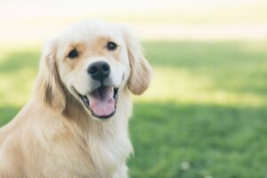 CBDfx Launches CBD-Infused Pet Balm As Pet CBD Industry Continues to Skyrocket