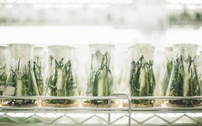 BioHarvest Sciences Delivers Record Q2
