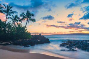 Cartel International, Inc. Announces Maui Exotic Boutique Hemp
