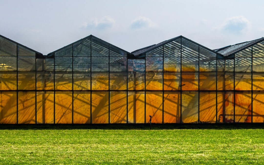 Village Farms International's Pure Sunfarms Receives Cannabis Cultivation License Amendment