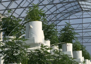 Affinor Growers Announces Issuance of Patent in Colombia for Automated Vertical Farming Production Towers