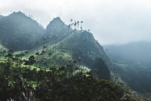 Colombia Lifts Legal Barriers, Marks Step Forward in Cannabis Growth