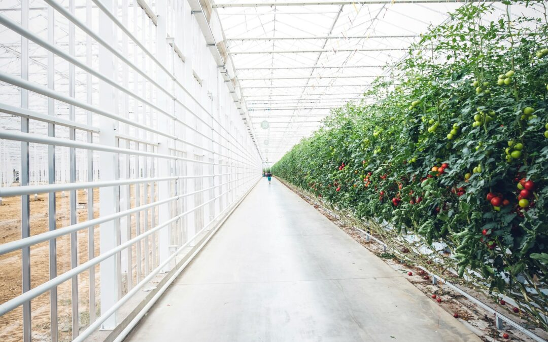 Village Farms International Reports Q2 2021 Financial Results
