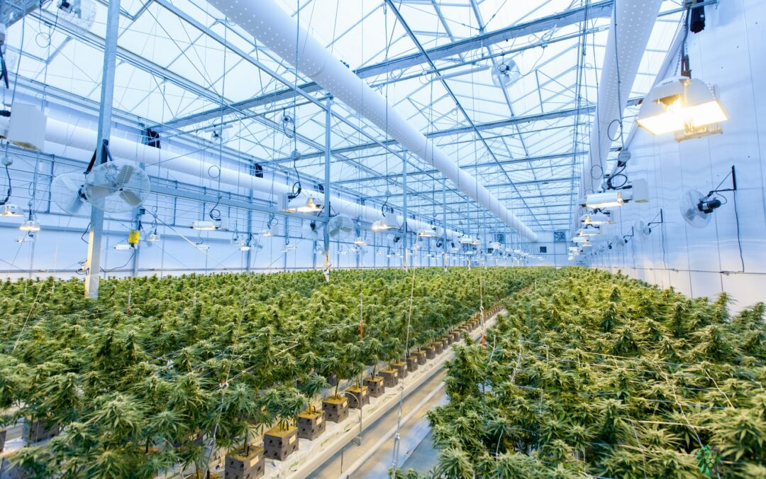 Glass House Brands Completes 5.5 million Square Foot Greenhouse Acquisition